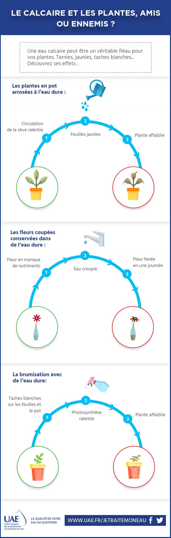 infographie plantes et calcaire
