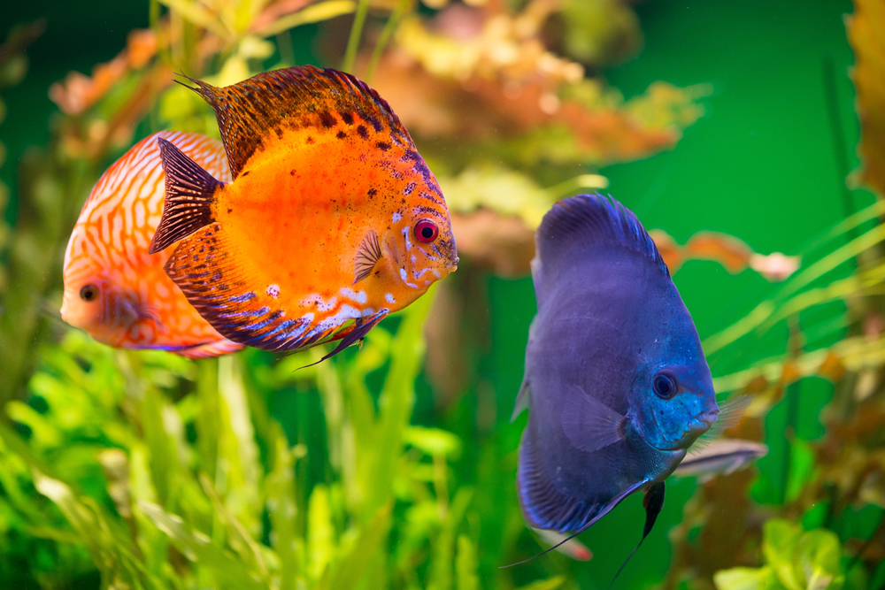 aquarium et calcaire poissons